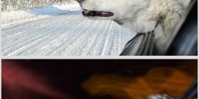 Perros en coches