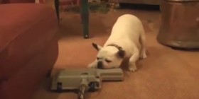 Perros vs aspiradoras