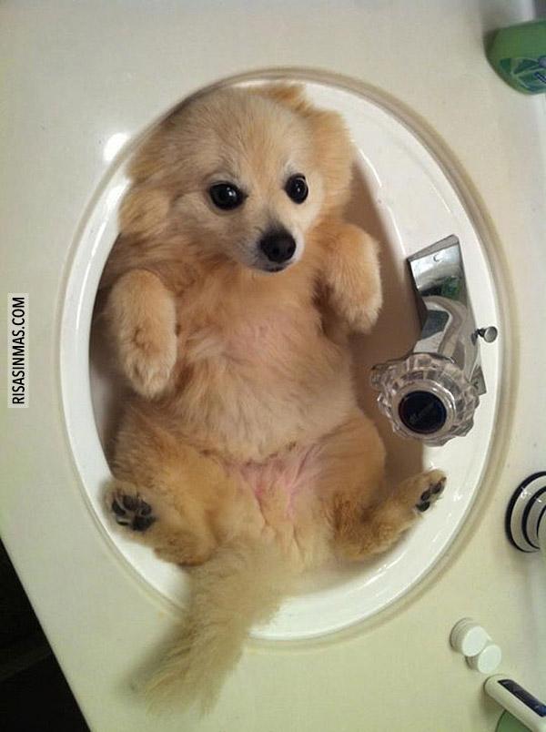 Preparado para el baño