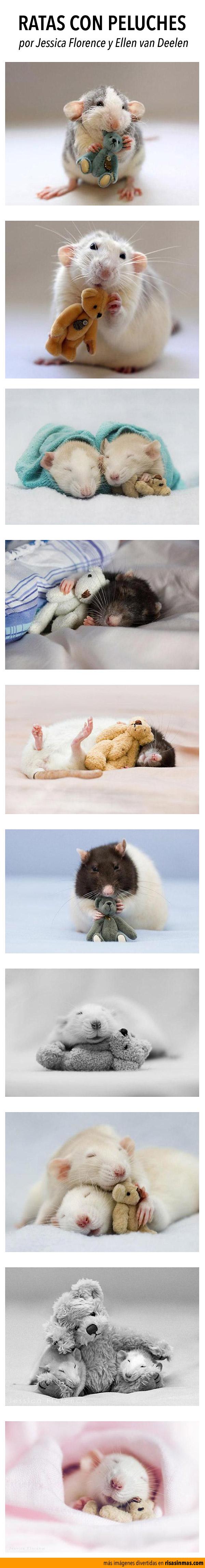 Ratas con peluches