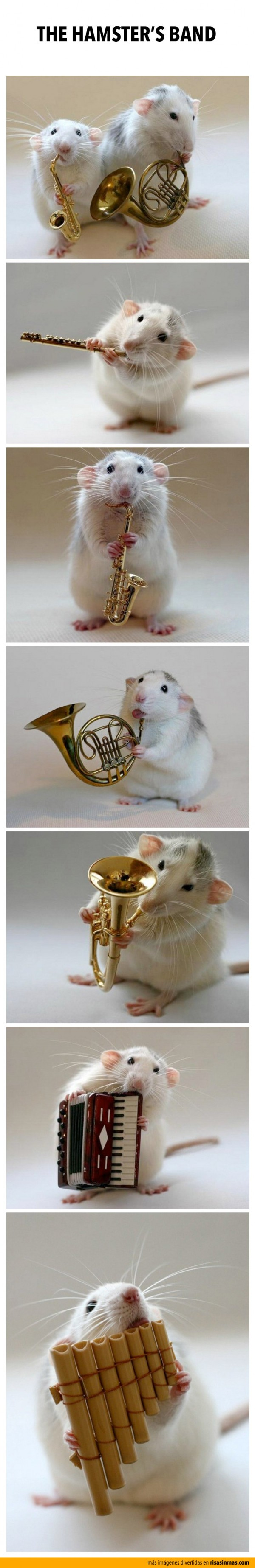 The Hamster's Band
