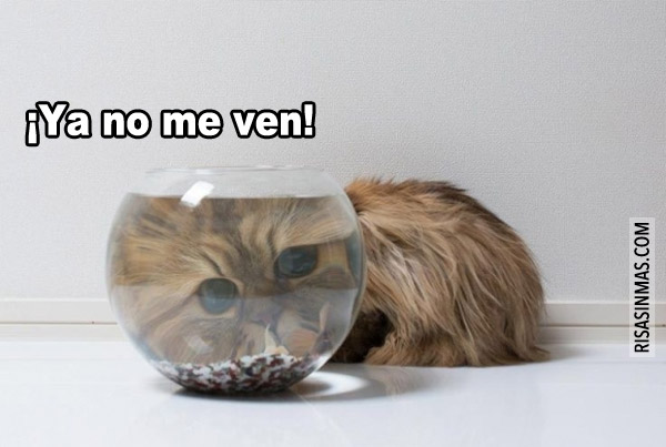 ¡Ya no me ven!