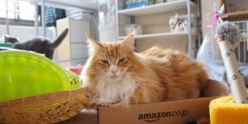 Amazon comienza a enviar gatos