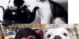 Animales felices