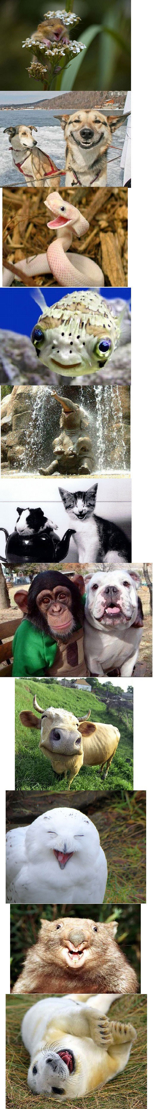 Animales felices