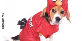 Disfraz Angry Birds para perro