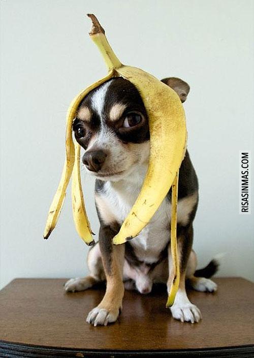 Disfrazado de plátano