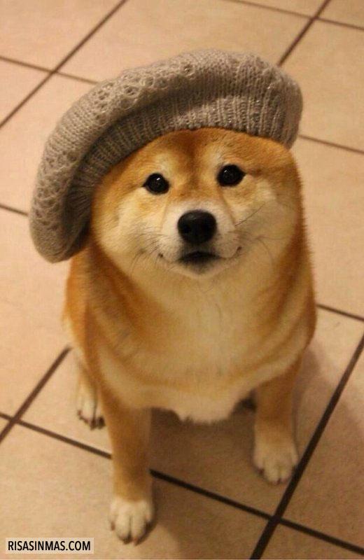 Doge hipster