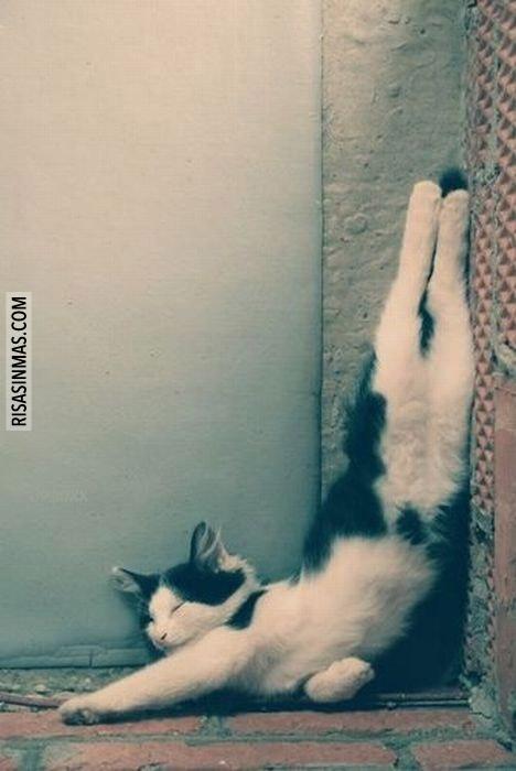 Dormir a pierna suelta