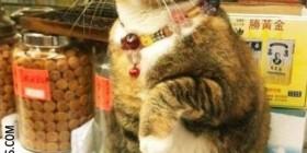 El gato de la suerte real