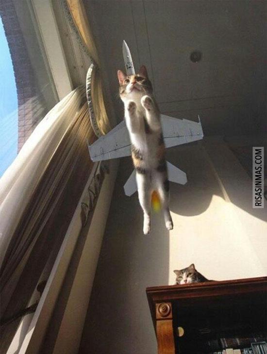 ¿Es un pájaro? ¿Es un avión? ¡No, es… mi gato!