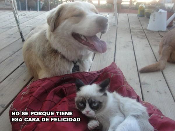 Grumpy Cat siempre enfadado