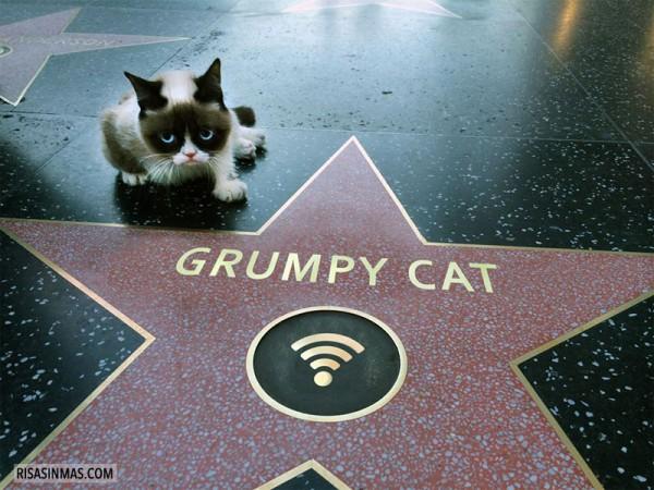 Grumpy Cat en el Paseo de la Fama de Hollywood