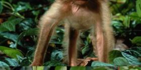 Imágenes graciosas: Monos