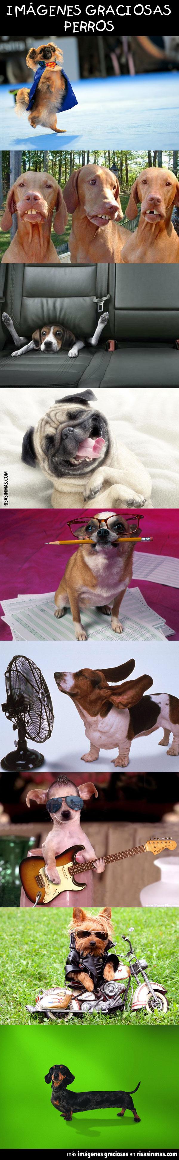 Imágenes graciosas: Perros