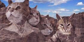 Monte Rushmore en un mundo de gatos