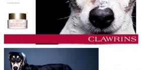 Perros como modelos de marcas de lujo