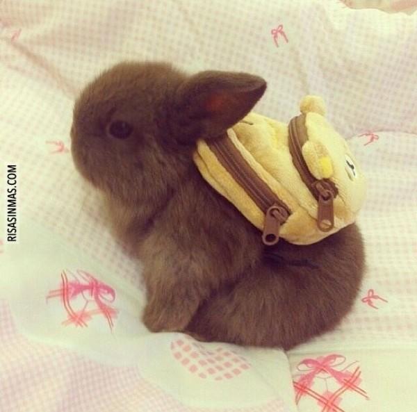 Preparado para ir al colegio