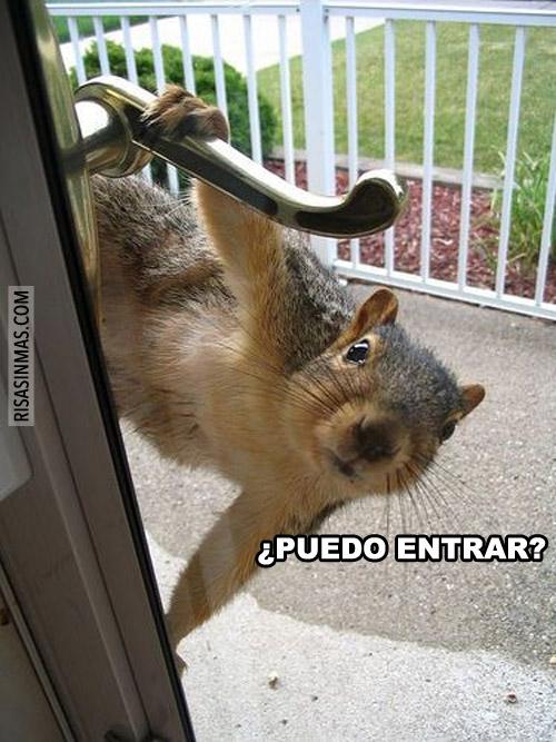 ¿Puedo entrar?