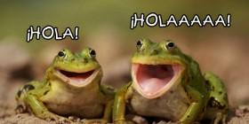 Ranas saludando