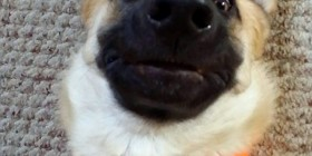 Selfie perruna