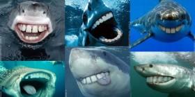 Sonrisas de tiburón