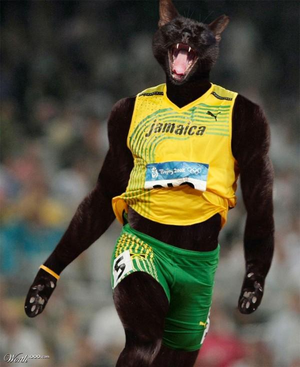 Usain Bolt versión gatuna