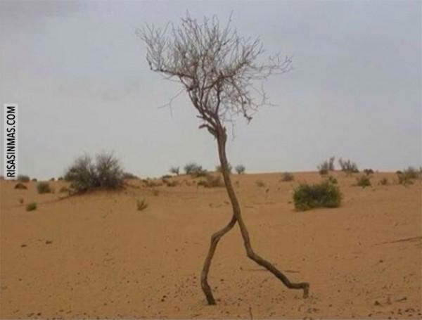 Árbol corriendo