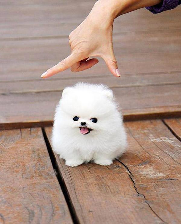 ¡ATENCIÓN, perro peligroso!