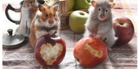 Aventuras de hamsters