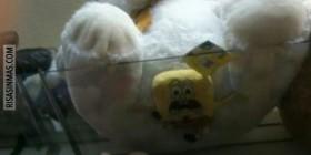 Bob esponja aplastado