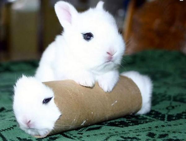 Imagen tierna del día: conejitos en apuros