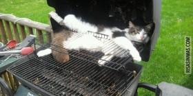 Gato a la barbacoa