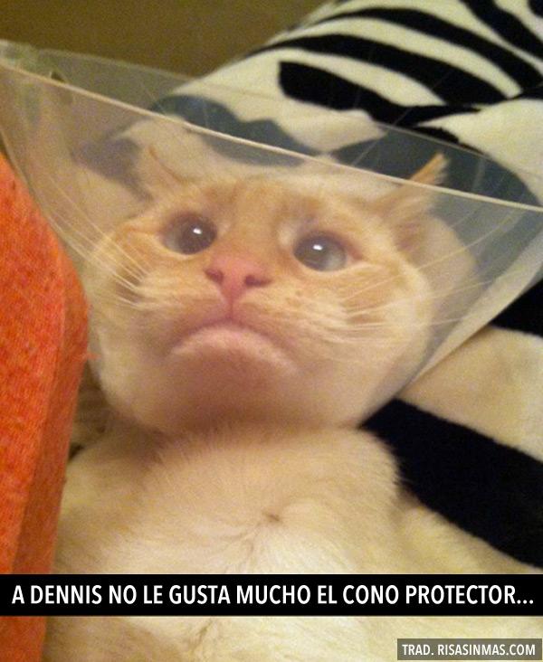 A Dennis no le gusta el cono protector