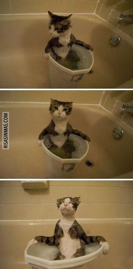 Gato en su baño relajante