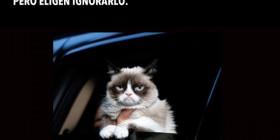 Los gatos ignoran a su dueño