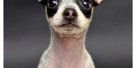 Merle, otro perrete famoso