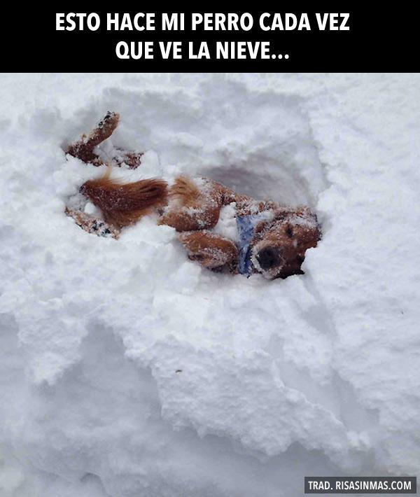 Mi perro en la nieve