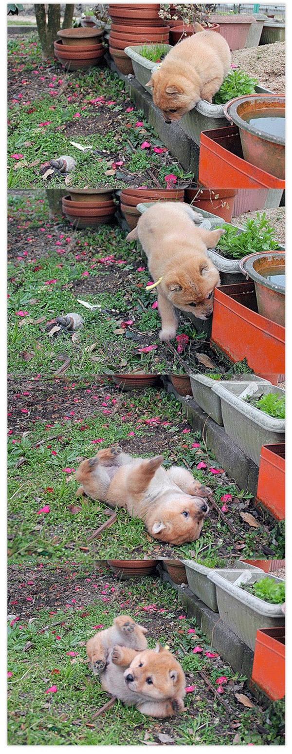 Un perrete en apuros