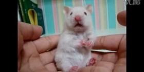 Versión completa del ratón sorprendido