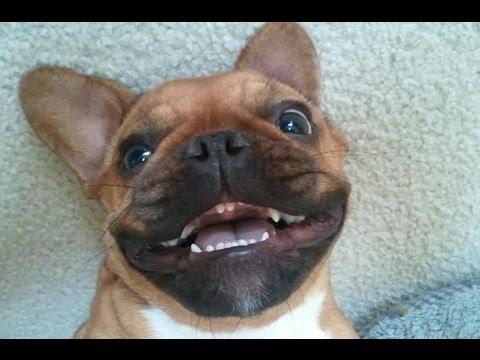 Vídeos divertidos: Perros