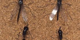 Chinchetas Insectos