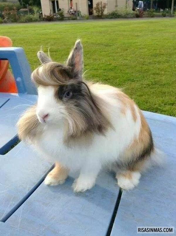 Conejo presumido