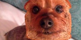 Definición gráfica: Cara pan