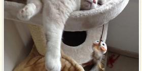 El gato Miaouquitchoune