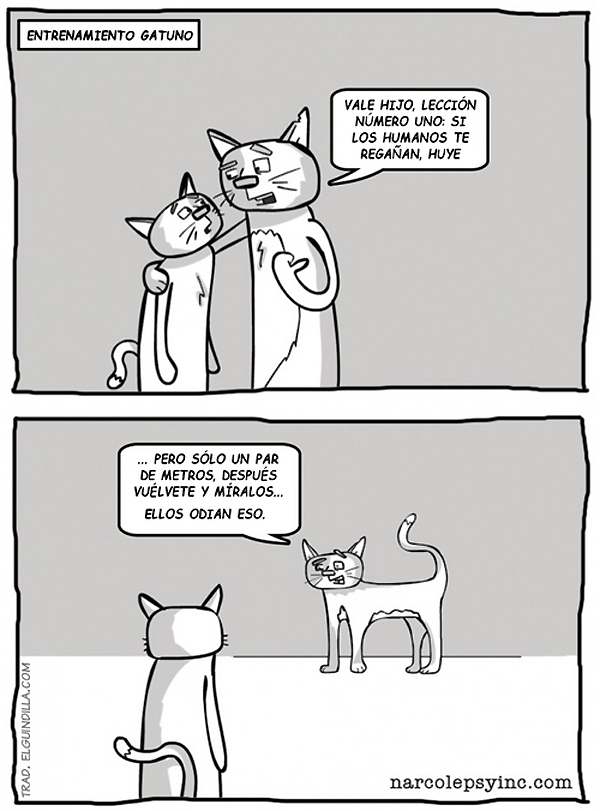 Entrenamiento de gatos