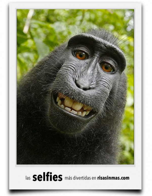 La divertida selfie de un monete