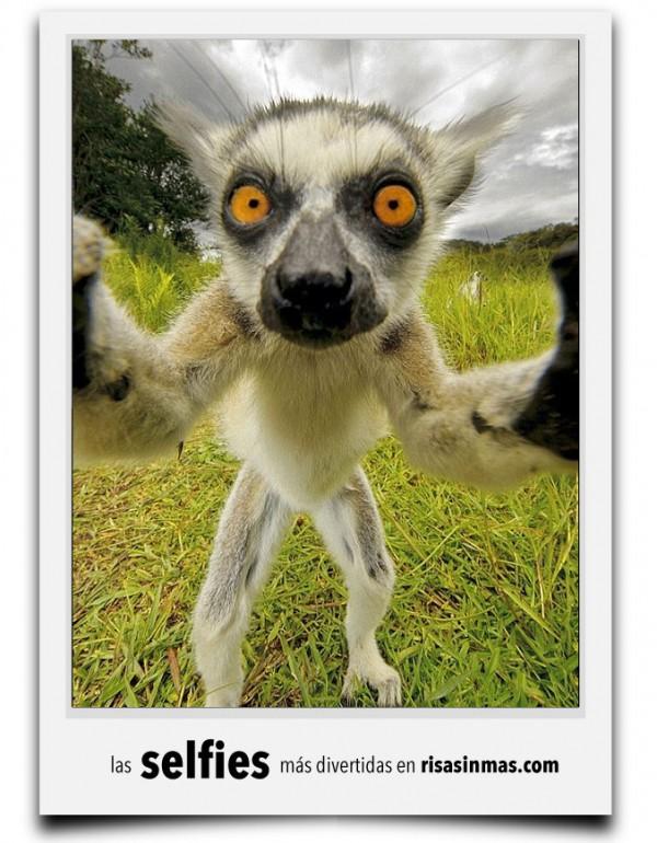 La selfy del lemur