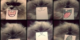 Las diferentes caras de mi gato