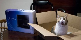 Mi gato al llegar la PS4 a casa